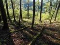 Padlé kmeny dokreslují relativní přirozenost lesa.