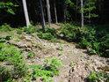 Prosluněný lesní prostor s mladými duby, buky a jeřáby.