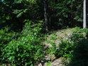 Mladé stromy se mají k životu na uvolněném lesním podloží.