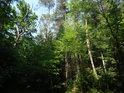 Smíšený les je všeobecně prospěšný koncept.