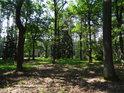 \takový zajímavý vcelku průhledný les.