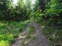 Lesní cesta pod dubovými listy.