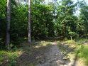 Lesní cesta s borovými šiškami.