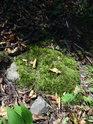 Mechem obrostlý osamělý kámen uprostřed habrového lesa.