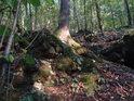 Habrový pata na lesním terénním zlomu.