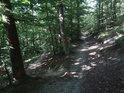 Rozcestí lesních pěšin.