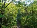Pěšina mezi lesní  křovím.