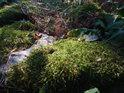 Přízemní detail mechu na kameni.