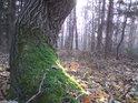 Přírodní rezervace nedaleko obce Vysoké Chvojno