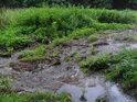 Písčitobahnité náplavy Augšperského potoka.