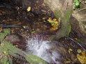 Malý přirozený splav na Augšperském potoce vytvořil kořen pobřežního stromu.