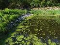 Růžek horního rybníka.