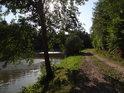 Olše na břehu dolního rybníka a náspu lesní cesty Útěchov – Lelekovice.