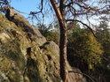 Kmen uschlé borovice u skalní stěny.