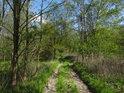 Lužní cesta na severu chráněného území.