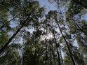 Slunce se na počátku května ještě dostává poměrně snadno přes listy stromů, které ovšem každým dnem rostou a stíní víc a víc.