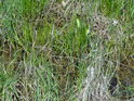 O tom, že louka v severozápadním cípu Barochu je mokrá, nemůže být pochyb, inu stával tu rybník.