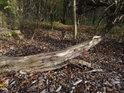 Ulomená vrbová větev na okraji bažantnice.