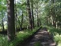 Cesta po hrázi mezi Velkým Bědným rybníkem a náhonem Mlýnka.