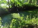 Žabincem pokrytá hladina přivaděče a rybníka Velký Okluk.