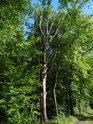 Stromořadí zpevňuje hráz Bažantuly.