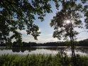 Slunce za dvojicí mladých jasanů nad rybníkem Bažantula.