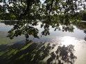 Dubové větve klesají k hladině rybníka Bažantula.