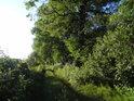Hráz mezi rybníky Velký Bědný rybník a Malý Okluk.