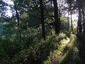 Večerní Slunce zalévá pěšinu na severním cípu Velkého Bědného rybníka.