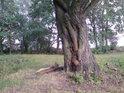 Kmen vrby už má něco za sebou, inu vlhkosti je kolem tolik, že i tak vodymilovný strom, jakým je bezesporu vrba, dostává zabrat.