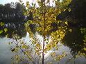 Břízka s podzimními kryje odraz Slunce v poklidné hladině.