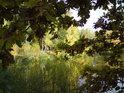 Listí dubu se barví v závislosti na množství slunečního svitu, ve stínu jsou barvy vždy o něco méně projasněné.