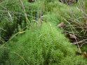 Mech na pobřeží prorůstá travou a hostí pár spadlých lístečků.