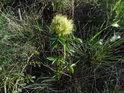 Zajímavý žlutý květ.