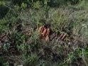 Odložené rozkládající se tašky začínají být součástí přírody a zde i chráněného území.