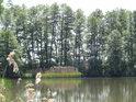 Horní Zábranský rybník, za olšemi vzadu teče Opatovický kanál.