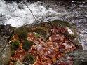 Loňské bukové listí vodou Zaječího potoka skrápěné a mechem obrůstané.