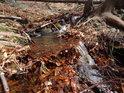 Dočasná přirozená hrázka z loňského bukového listí na Zaječím potoce.