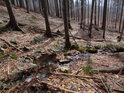 Zaječí potok má velice prudký spád a prodírá se smíšeným, převážně smrkovo - bukovým lesem.