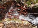 Maličká tůňka na Zaječím potoce se může pochlubit průzračnou vodou.
