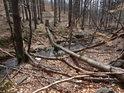 Tak vypadá přirozený les zjara, pokud ještě není nové listí.