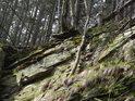 Některé stromy nad skalním srázem doslova balancují, což je klam, jejich kořeny se dobře uchytily v různých puklinách.