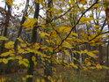 Podzimní barvy lesa při zatažené obloze jsou jen odvarem toho, co lze spatřit za krásného sluníčka.
