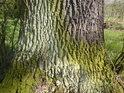 Barevné pásy na dubu svědčí o vodním prostředí.