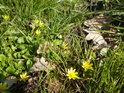 Vůně se dokáží mísit v bezpočtu kombinací, zde to vypadalo na střet dozvuků podzimu se silnějším jarem.