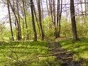 Lesní stružka uprostřed jarních barev.