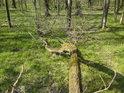 Pohled do jarního lesa z výšky spadlé větve.