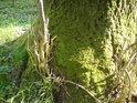 Stromový detail.