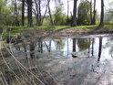 Jihovýchodní cíp rybníka Postolov z blízka.