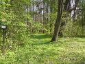 Vhled do lužního lesa.